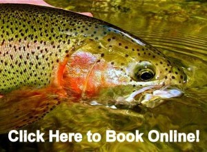 Book online, Fish Gatlinburg Pigeon Forge Sevierville Tennessee