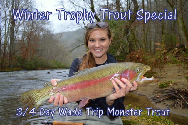 Winter Trophy Trout Special, Fly Fishing Guides in Gatlinburg Pigeon Forge Cherokee Bryson City,