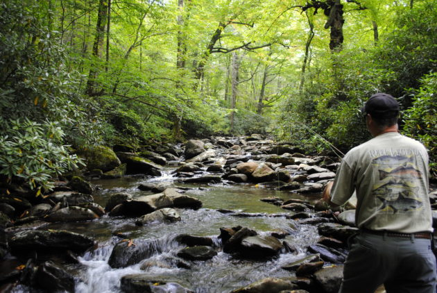 Contact, 828-488-7665, Fly Fishing the Smokies, Fly Fishiing Guides Great Smoky Mountains National Park, Gatlinburg Fly Fishing Guides